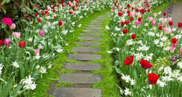 jardim e caminhos
