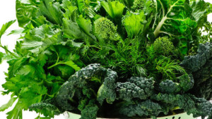 folhas verdes para idosos