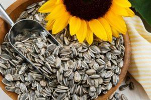 sementes-de-girassol