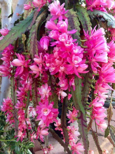 flores de outono no AVôVó