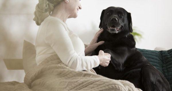 cães ideais para idosos