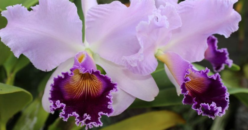 flores exóticas pelo mundo