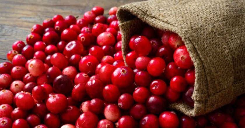Cranberry, oxicoco ou mirtilo
