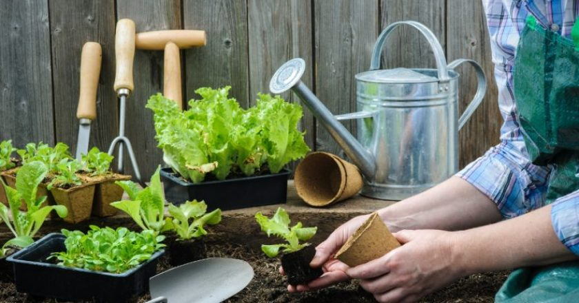 horta em casa para idosos