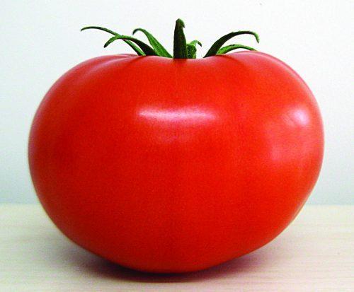 O tomate e os idosos