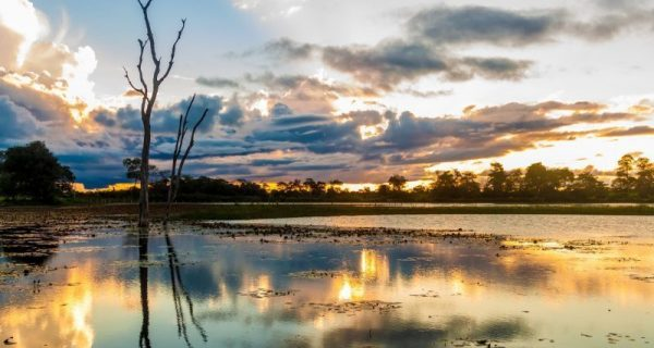 Pantanal Mato-Grossense para idosos visitarem