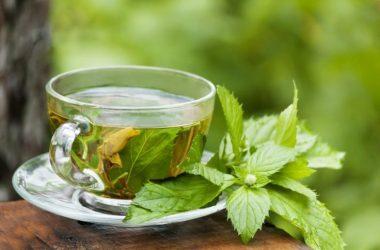 chá de mastruz para idosos faz bem