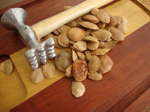 riscos de se consumir semente de sucupira
