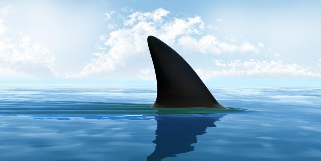 cartilagem de tubarão para que serve?
