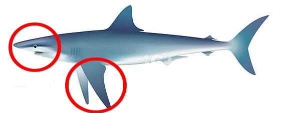 cartilagem de tubarão para idosos