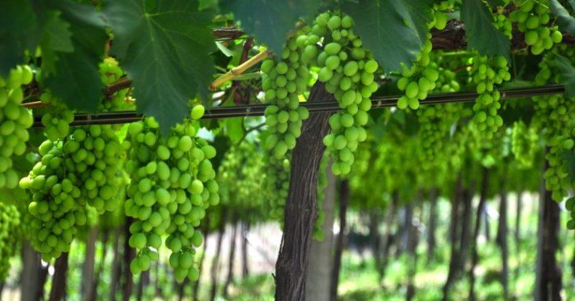 vinícolas pelo mundo