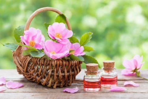 Óleo rosa mosqueta para pele dos idosos