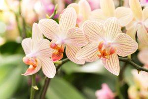 como cuidar da minha orquídea