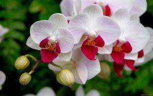 https://www.avovo.com.br/plantas-que-ajudam-a-purificar-o-ar/
