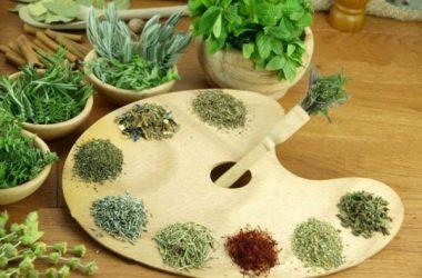 ervas de água para plantar em casa