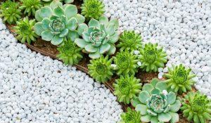 Criatividade no jardim da VoVó
