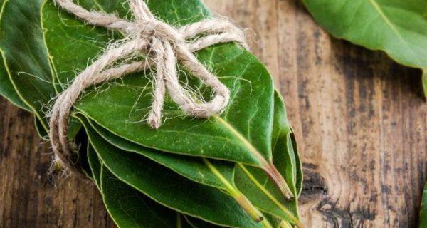 Folhas de louro na alimentação dos idosos