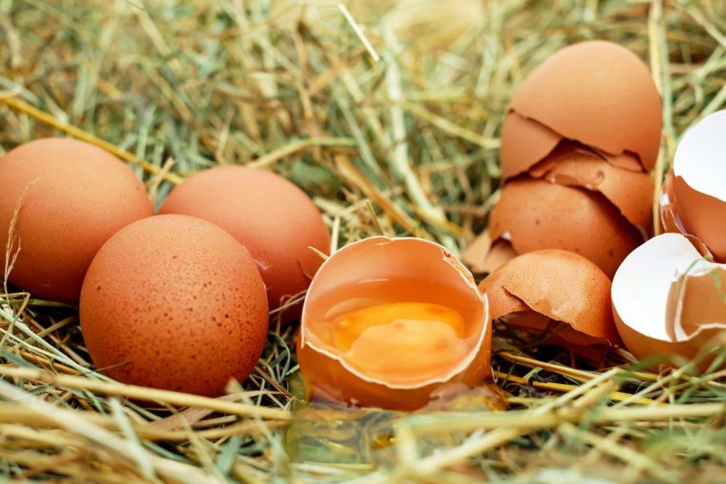 ovo faz bem aos idosos