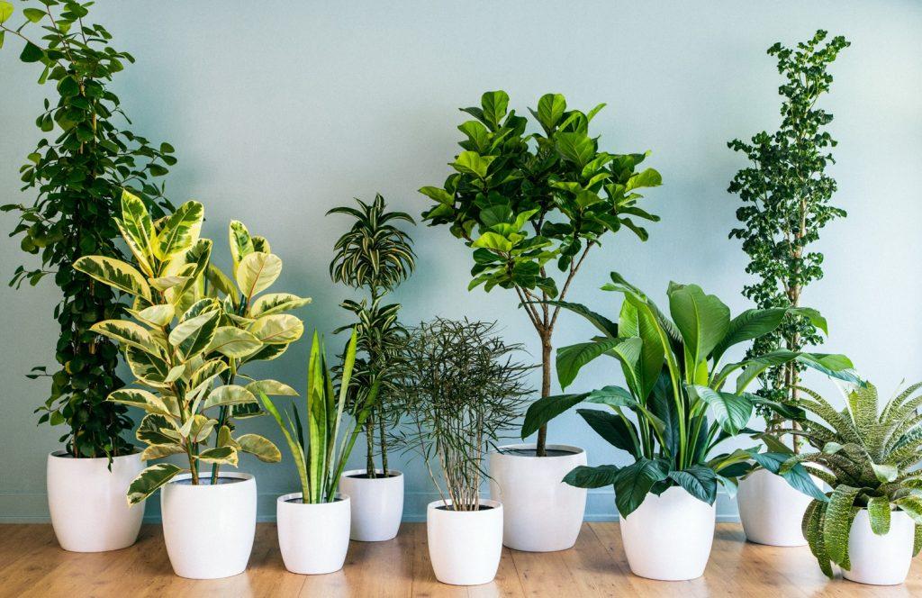 plantas que atraem boa energia para sua casa