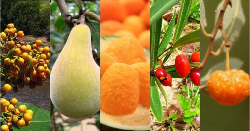 frutas do cerrado do Brasil