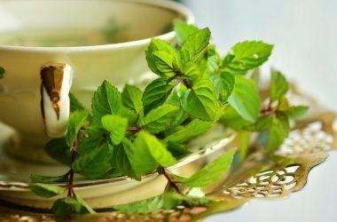 chá de menta para idosos