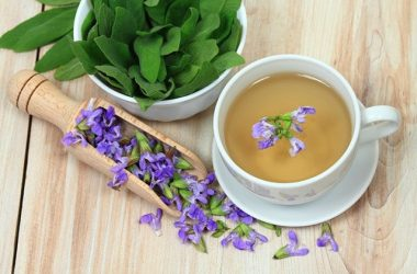 chá de sálvia para idosos