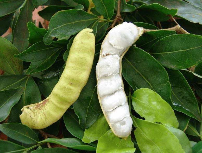 ingá fruta exótica