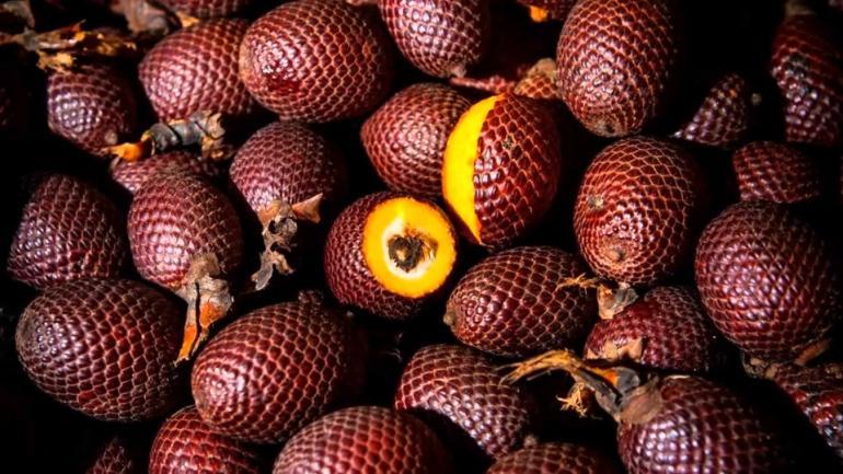 buriti uma fruta exótica e deliciosa