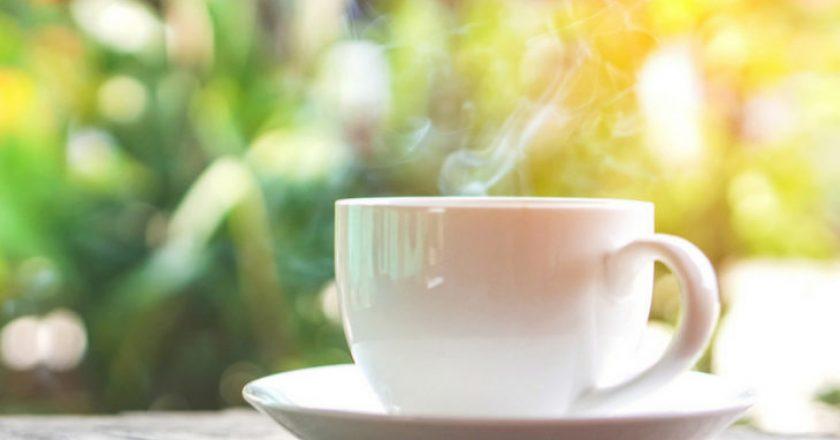 chá de espinheira santa para idosos