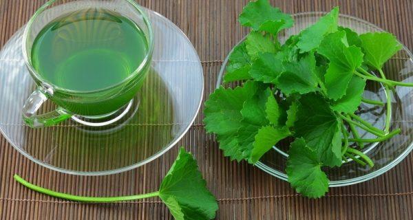 chá de centella asiática para idosos