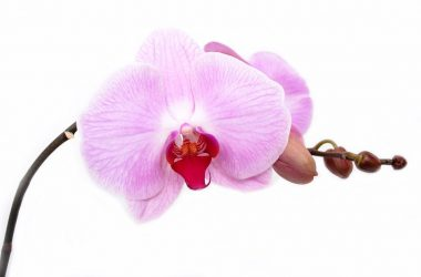 cultivando orquídeas em casa