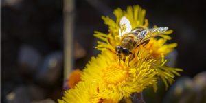 o mel das abelhas