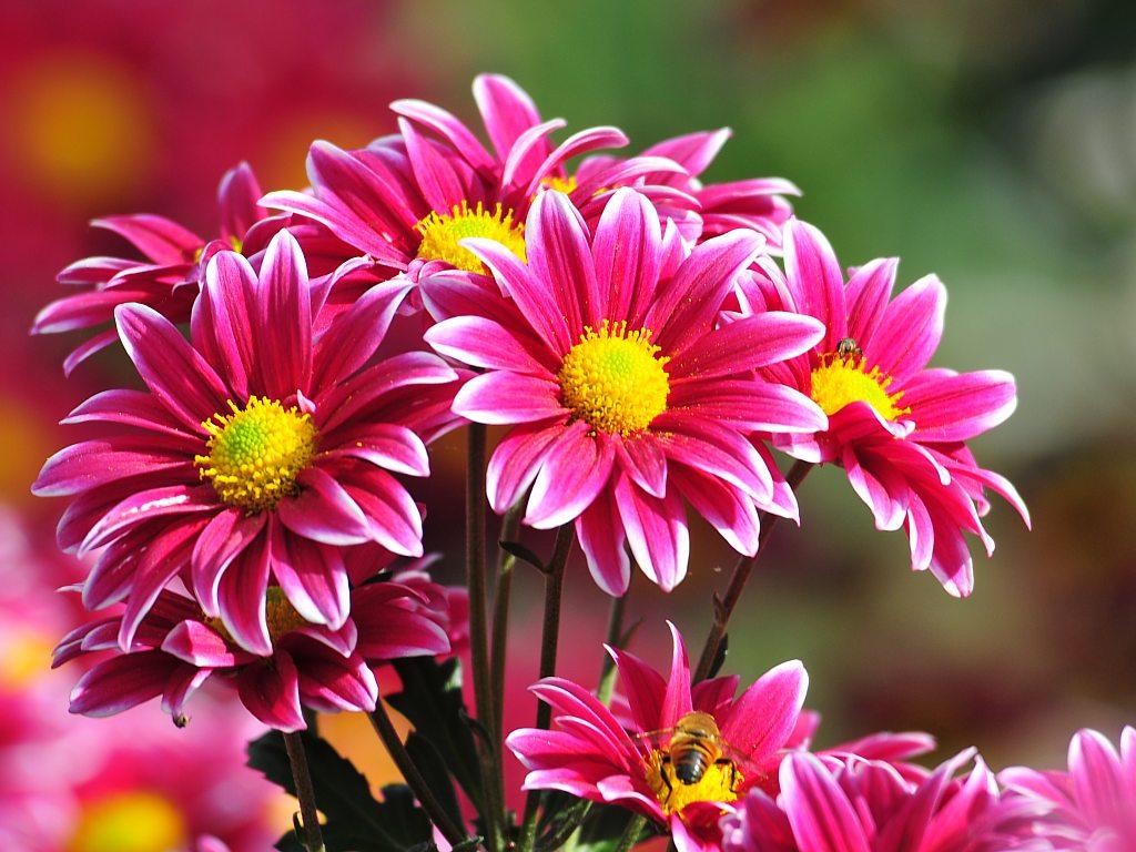 flores fáceis de plantar