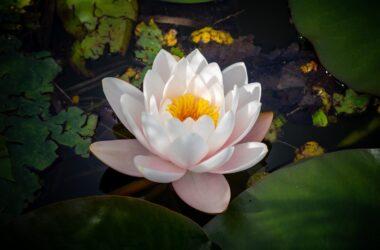 Flor foto criado por wirestock - br.freepik.com
